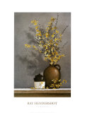Forsythia Prints by Ray Hendershot