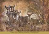 African Savannah I Poster by Marta Wiley