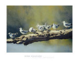 Out on a Limb, White Winged Terns Poster by Dino Paravano