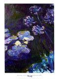 Nenúfares y agapantos, 1914-1917 Láminas por Claude Monet