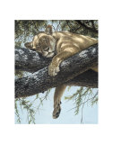 Lake Manyara Lioness Print by Guy Coheleach