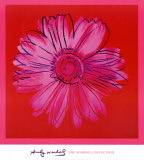 Daisy, c. 1982 (crimson and pink) Lminas por Andy Warhol