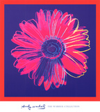 Daisy, c.1982 (Blue and Red) Poster af Andy Warhol