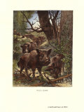 Wild Boar Prints by Friedrich Specht