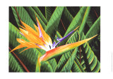 Bird of Paradise Posters by Glenn Cernosek