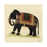 Elephant from India II Art