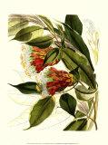 Fantastische Botanik II Poster von Samuel Curtis