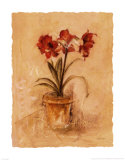 Secret Amaryllis II Lminas por Cheri Blum