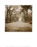 Central Park Prints by Sondra Wampler