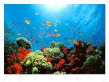 Aquarium Posters par Federico Busonero