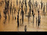 Pecheur sur le Lac de Kossou Prints by Yann Arthus-Bertrand