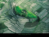 Terraced Rice Fields, Bali Poster by Yann Arthus-Bertrand