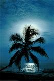 Moonlight Sonata Posters