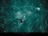 Yann Arthus-Bertrand - Baleine Plakát