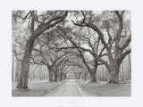 Oak Arches Prints by Jim Morris