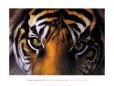 Eyes of the Goddess: Sumatran Tigress Reprodukcje autor Charles Alexander