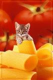Kitten Plakat