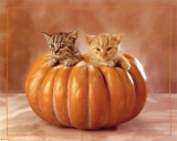 Kittens Prints