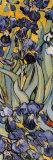 Lirios Póster por Vincent van Gogh