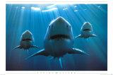 Hajer Plakater