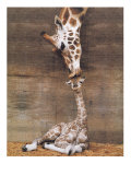 Giraffe, First Kiss Prints
