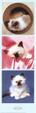 Kittens Posters