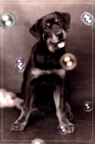 Dog with Bubbles Prints