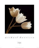 Three Tulips Prints by Michael Harrison