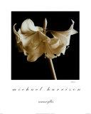 Narzissenlilien Kunstdrucke von Michael Harrison