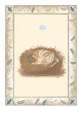 Woodland Nest I Poster