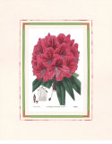 Rhododendron II Prints