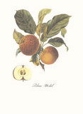 Apple, Blanc-Michel Print by Francois Langlois