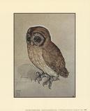 Little Owl Plakat autor Albrecht Dürer