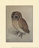 Little Owl Prints by Albrecht Dürer