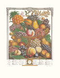 Twelve Months of Fruits, 1732, October Art by Robert Furber