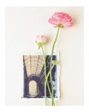 Peony, Euro-Floral Prints by Dorothy Gaubert Pyle