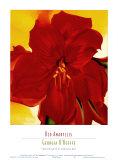 赤いアマリリス, 1937 高品質プリント : ジョージア・オキーフ