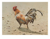 Banty Rooster Print by LaVere Hutchings