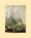 Tall Grass Posters by Albrecht Dürer