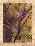 Suite de la selva tropical II Imágenes por Mimi Cora