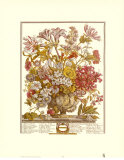 Twelve Months of Flowers, 1730, October Art by Robert Furber