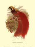 Oiseau de paradis Affiches