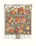 Twelve Months of Fruits, 1732, August Art by Robert Furber