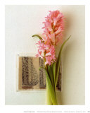 Hyacinth, Euro-Floral Prints by Dorothy Gaubert Pyle