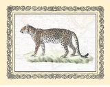 Leopard Prints