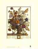 Twelve Months of Flowers, 1730, November Posters by Robert Furber