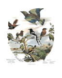 Asian Birds Posters by Edouard Travies
