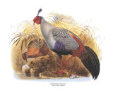 Siamese Crested Fireback Prints by  Wolf & Smit