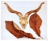 Ram's Skull with Brown Leaves Prints by Georgia O'Keeffe