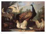 Barnyard with Chickens Posters by Melchior d'Hondecoeter
